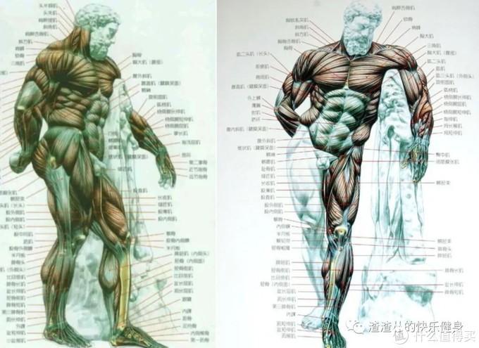 深蹲到底有什么用?最伤身体的3大常见错误+改善训练