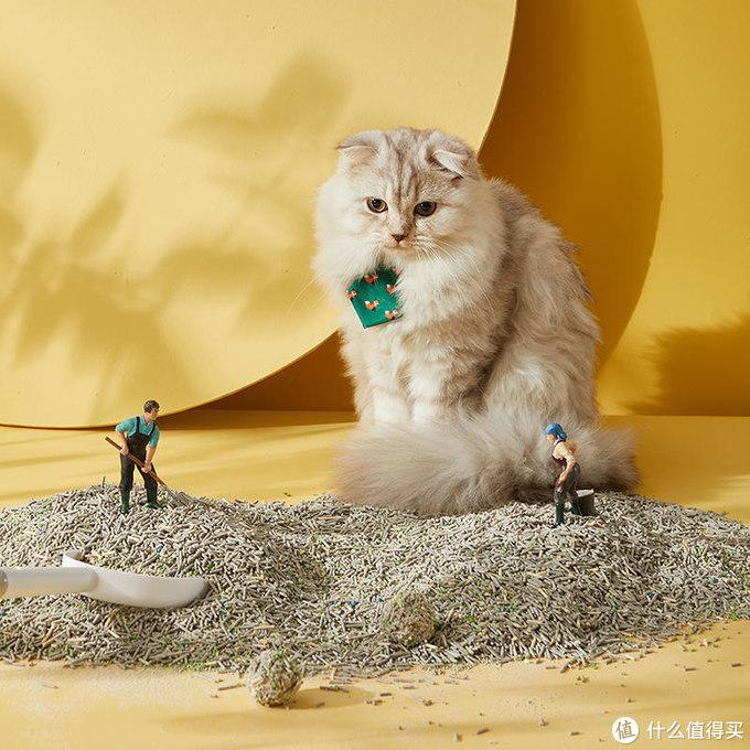 养猫必备,推荐一下巨好用的猫砂盆和猫砂