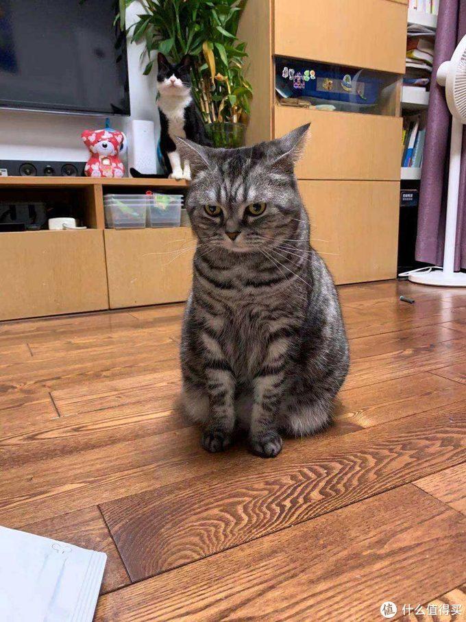 终于找到大小主子都爱吃的猫粮了—嘉蓝猫粮晒单