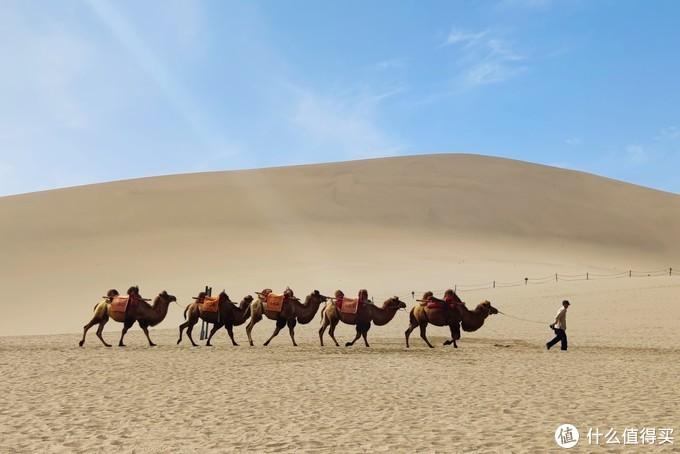 鸣沙山的骆驼队伍,驼人到月牙泉。