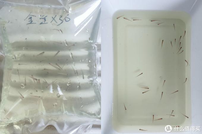 不用打氧和过滤,只需10多块打造懒人缸,感兴趣的你也可以试试