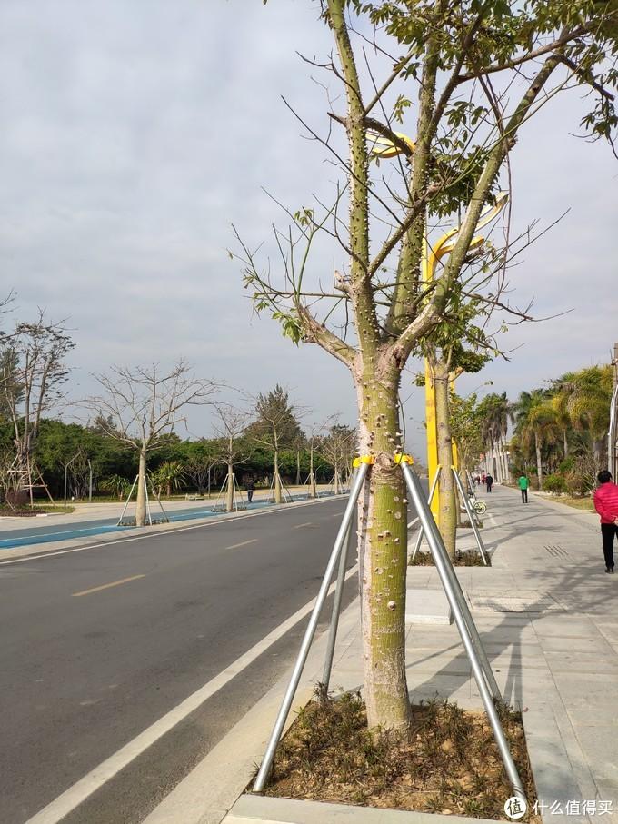 道路两边的木棉树