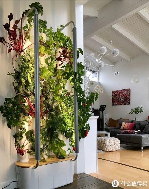 老外推出全自动种植机,0.2㎡能种30种植物,小黑屋也能实现园艺自由