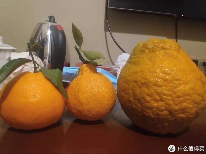 先上一张前两天在蒲江拍的照片从左到右依次为 耙耙柑----丑橘----长歪了的耙耙柑