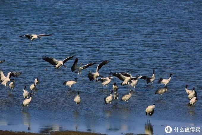 云南大山包黑颈鹤国家级自然保护区