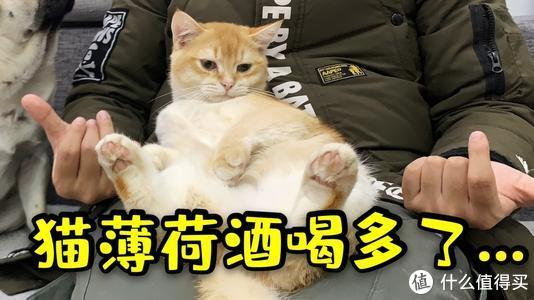 """猫咪高贵冷艳不亲人?整点""""82年珍藏的猫薄荷水""""试试!"""