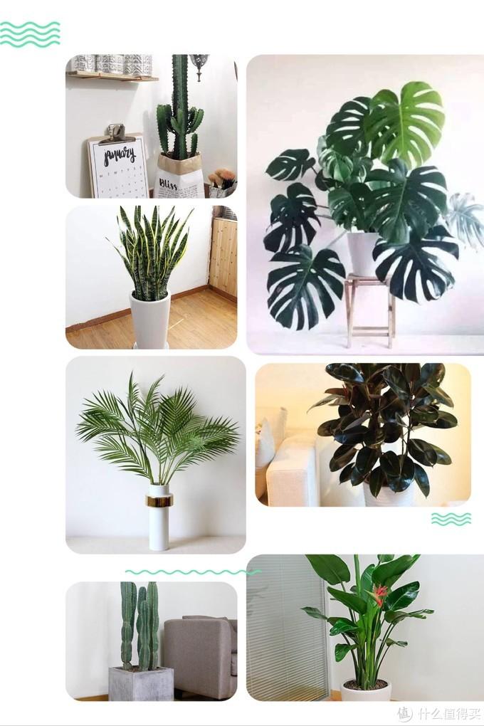 居家干货,新年添绿植,怎么摆放最合适(玄关、客厅、书房、卧室)