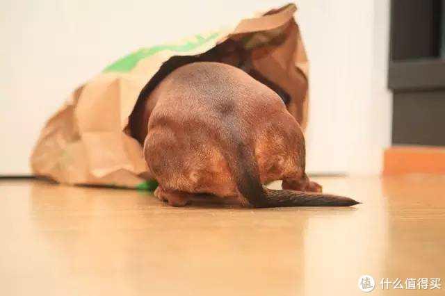 没有聚会的春节,有TA相伴不无聊!犬粮屯够屯对了吗?