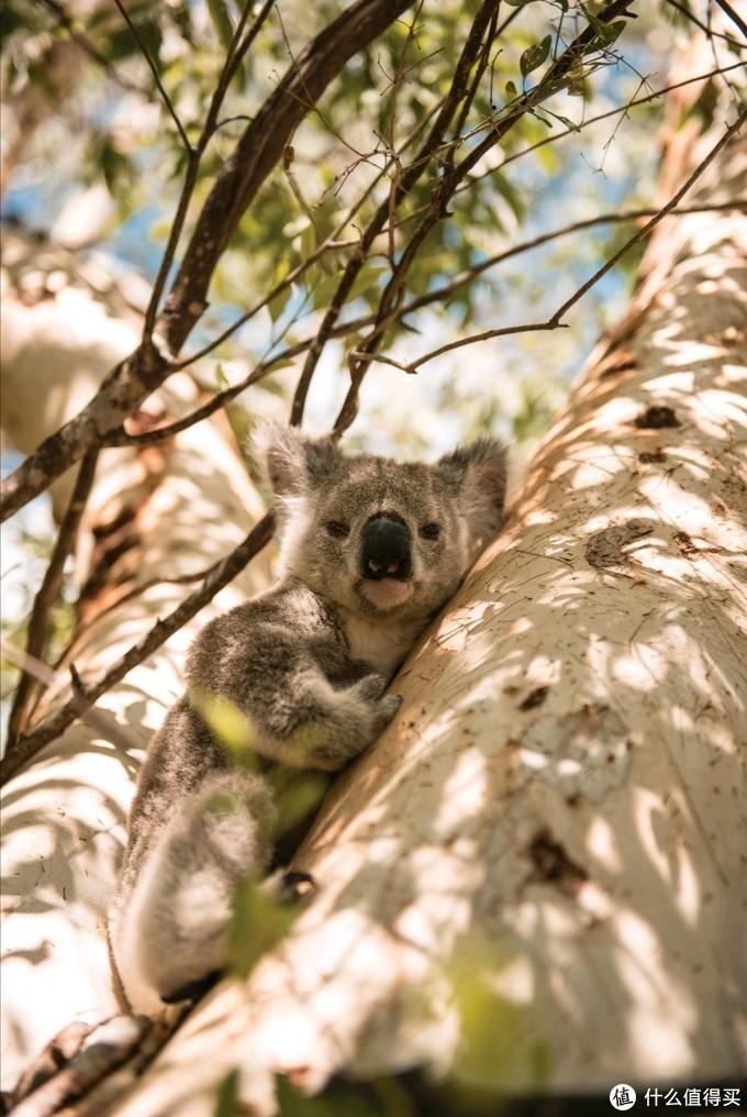 澳大利亚旅游的另一面 打卡大堡礁周边小众磁岛的环保度假体验