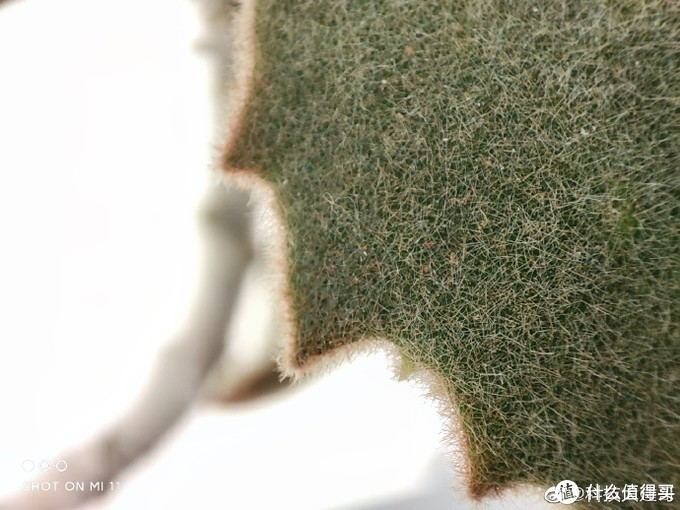 小米11拍照实测:一亿像素+超大底,对比华为vivo有啥优势