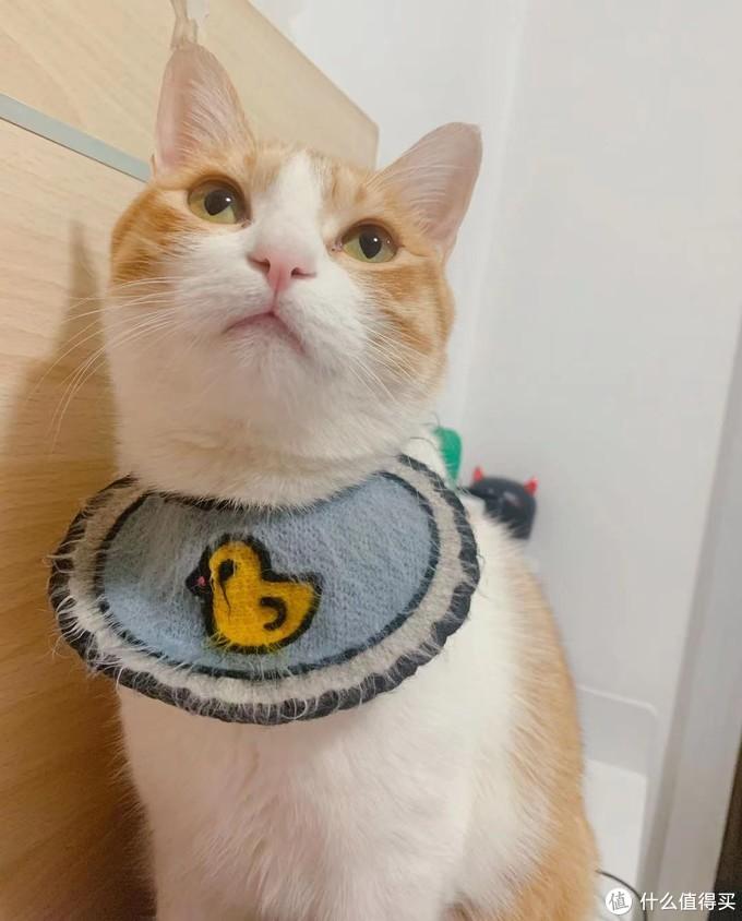 小猫咪能有啥坏心眼呢?