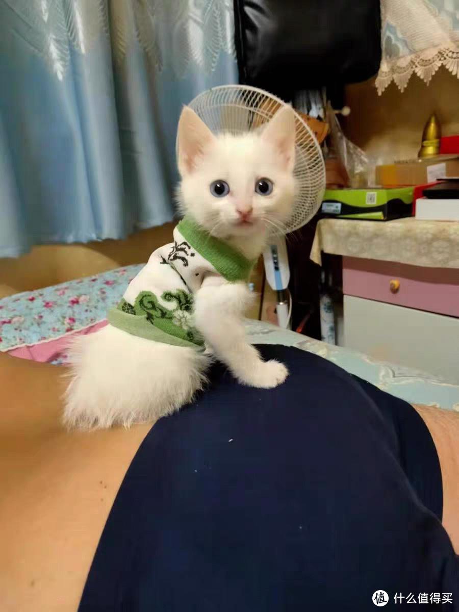 全价猫粮是什么意思?答案全在这里