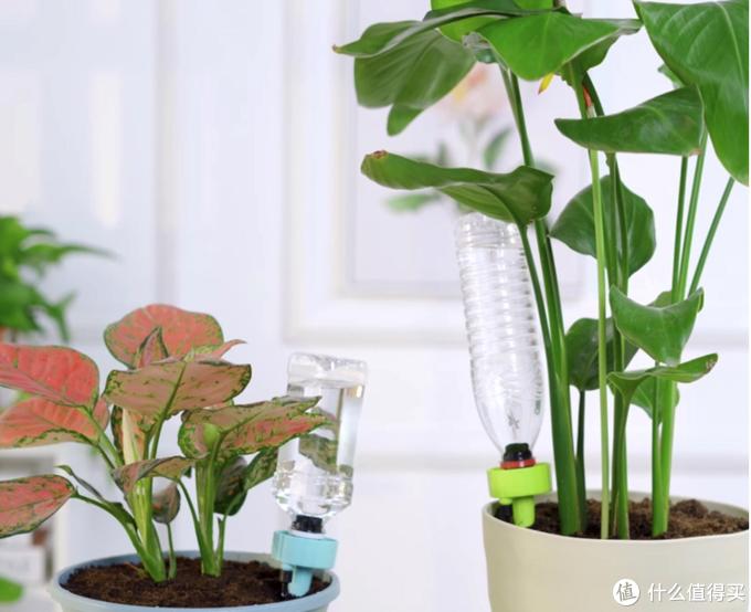 每日好物:过节出差没人浇花,4款自动浇花神器推荐!