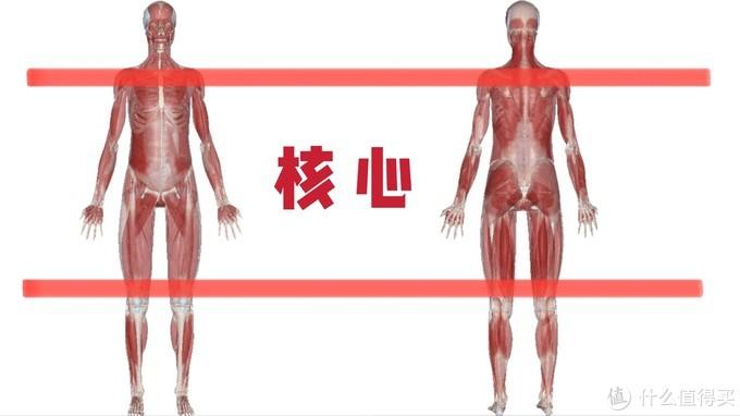 健身小白的入门级2大基础知识掌握:核心收紧+离心控制