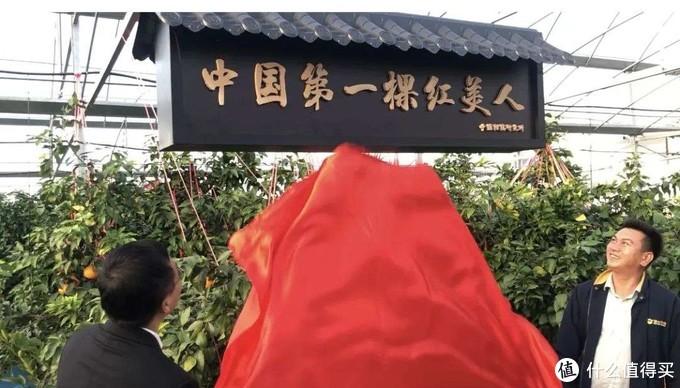 """年货水果选啥?橙子里的爱马仕---象山""""红美人"""""""
