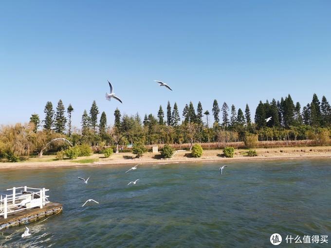湖边也可以喂海鸥,不过数量有点少