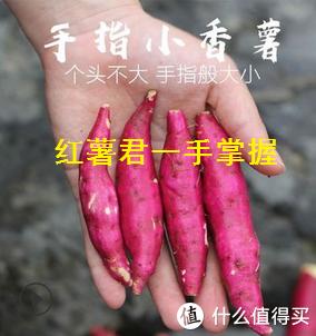居然被1688上的红薯给种草了,怎么破?