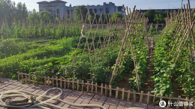 从0开始打造我的智能小菜园,养花种菜,30天满满收获!(种菜、养花、扦插、嫁接)