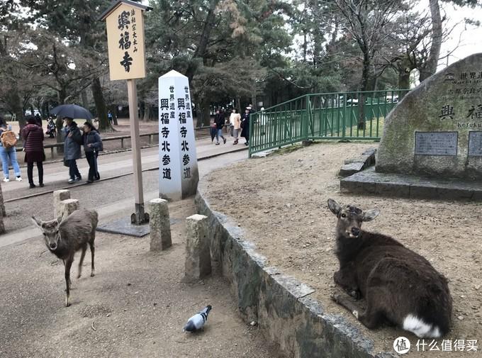 奈良公园的鹿