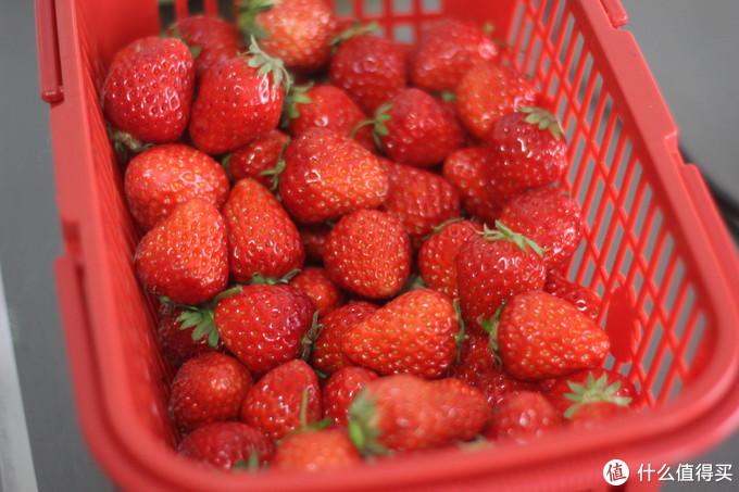 农家摘草莓,这样才不亏!最全草莓采摘攻略+拍照攻略来啦!经典攻略请收藏