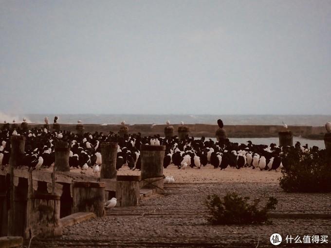 奥马鲁营地旁边的桥上,这不是企鹅,这是一种鸟