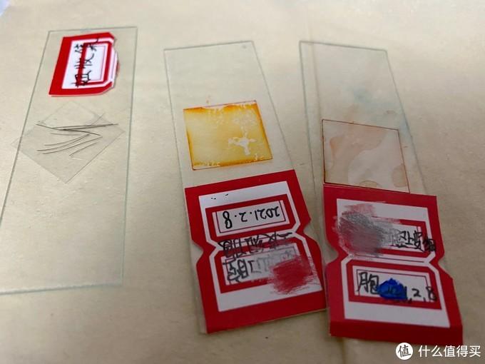 染了颜色做了标签的切片,还收集观察了小朋友们的头发