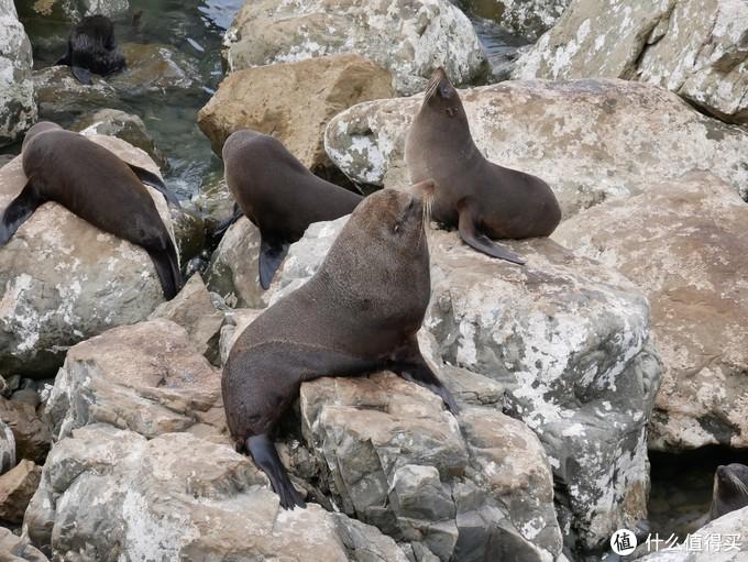 凯库拉半岛的野生动物