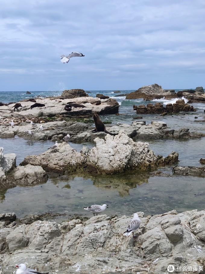 不计其数的海狮海豹