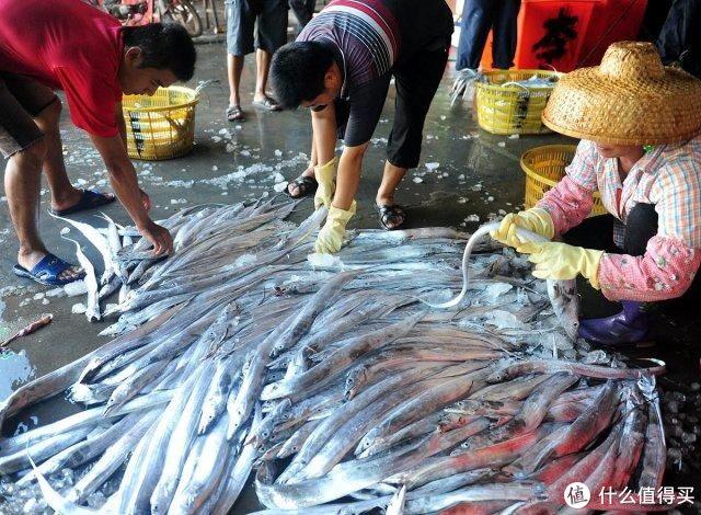 想吃带鱼,遇到此4种便宜也别买