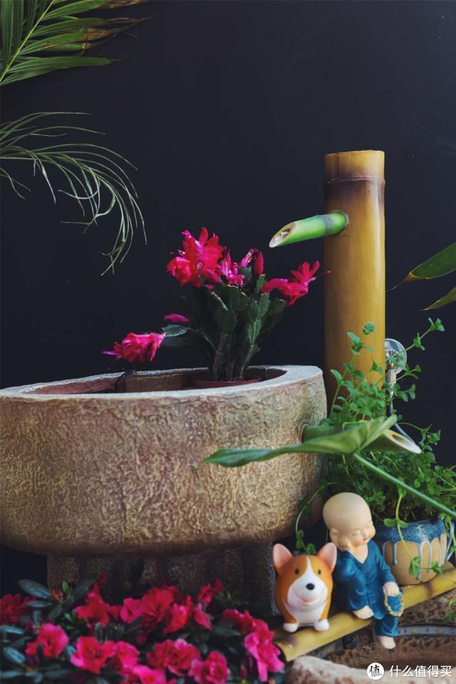 一入他家,就被玄关深深迷住,种花、引水、养鱼,日子过得太幸福