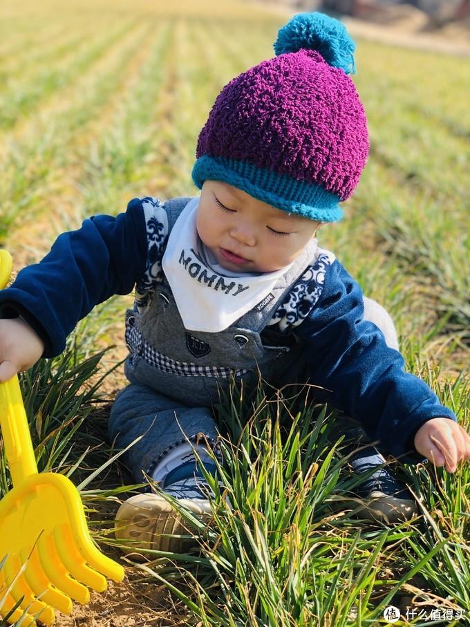 小时候最喜欢的娱乐项目—挖荠菜,地里的野菜,且挖且珍惜