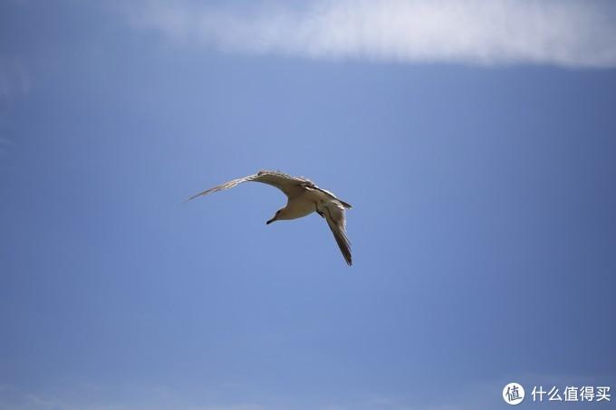 苍劲有力的翅膀