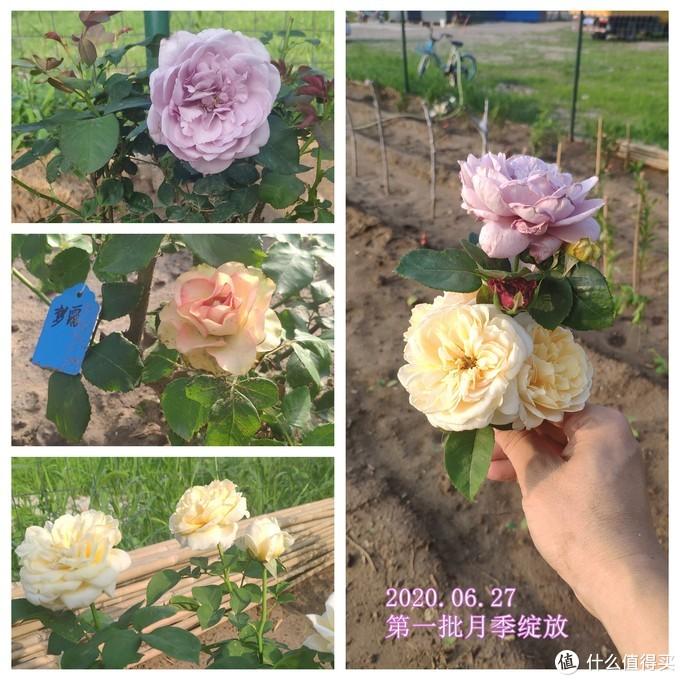 盛开的鲜花,像青涩少女的脸蛋,粉粉嫩嫩