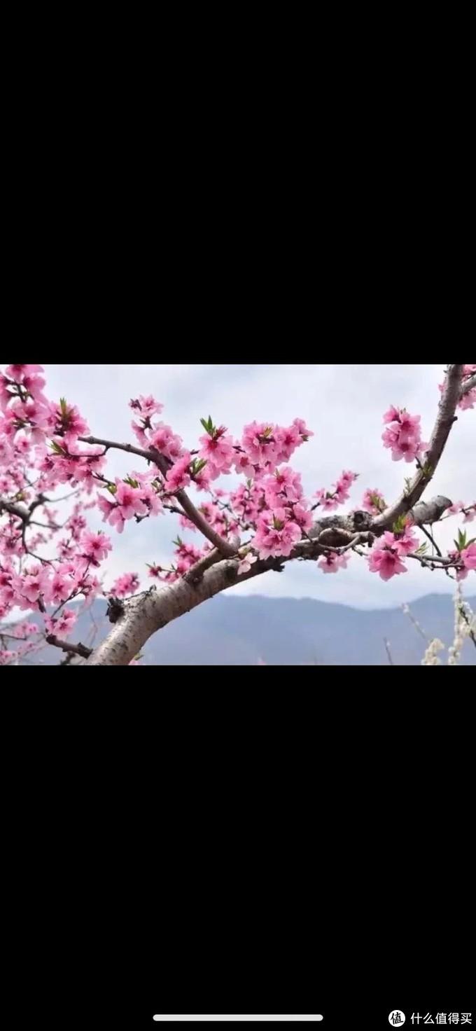春天来了,我生活的城市,湖南的春天是多么的美