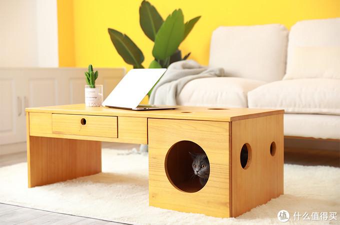 6款小户型必备人猫共用家具推荐,主子开心,我也省心