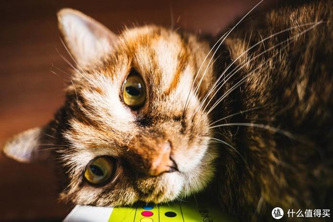 小巧精悍怼脸拍猫的广角镜头——腾龙20mm F2.8