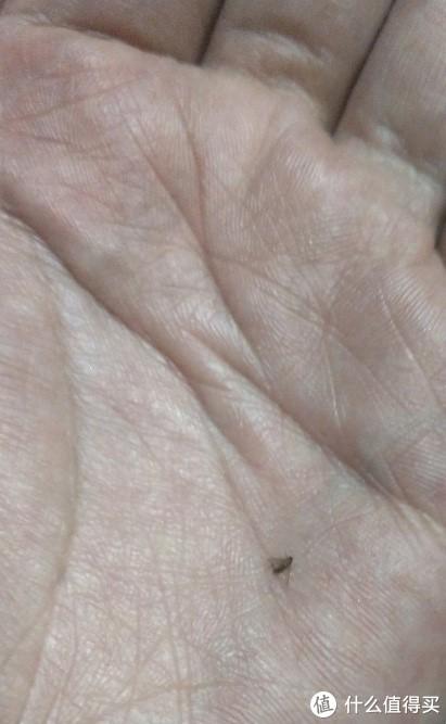 据说是果蝇