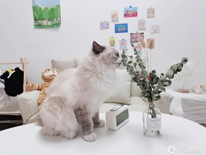 2021超火网红6款猫咪国产主食罐测评丨阿飞与巴弟、尾巴生活、猫博士、萌克...