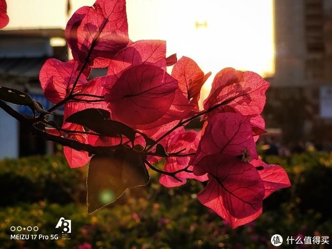 魅族17Pro摄影作品及心得分享