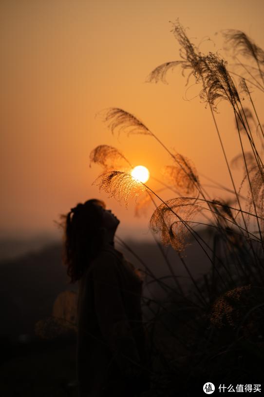夕阳遇到芦苇就是恋爱的感觉