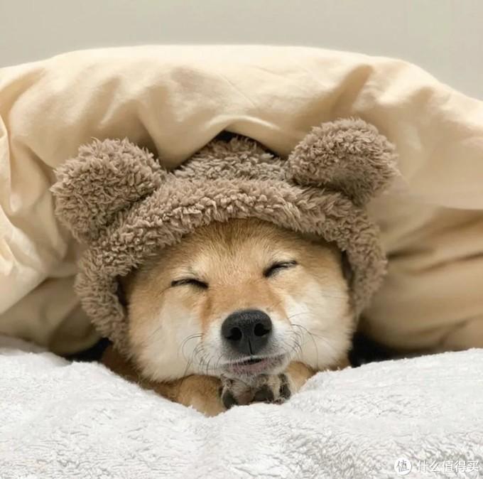 为什么被窝太暖,你就起不来?