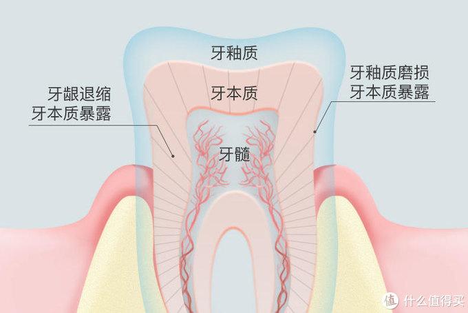一个牙龈患者的脱敏牙膏挑选记录!请珍惜你的一口好牙