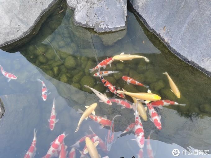 想去白嫖却被反薅的北京网红景点---罗红摄影艺术馆