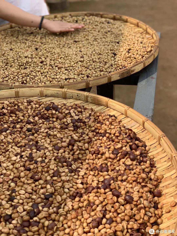 云澜咖啡庄园实拍