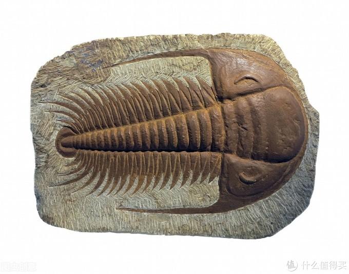 物种进化造就了现在的生物多样化,那么,生命大爆发源于什么?