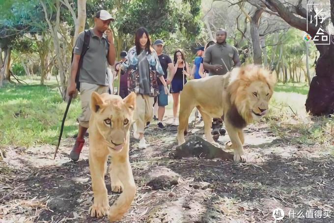 性价比更高的毛里求斯:景色媲美马尔代夫,还可以和野生动物同行