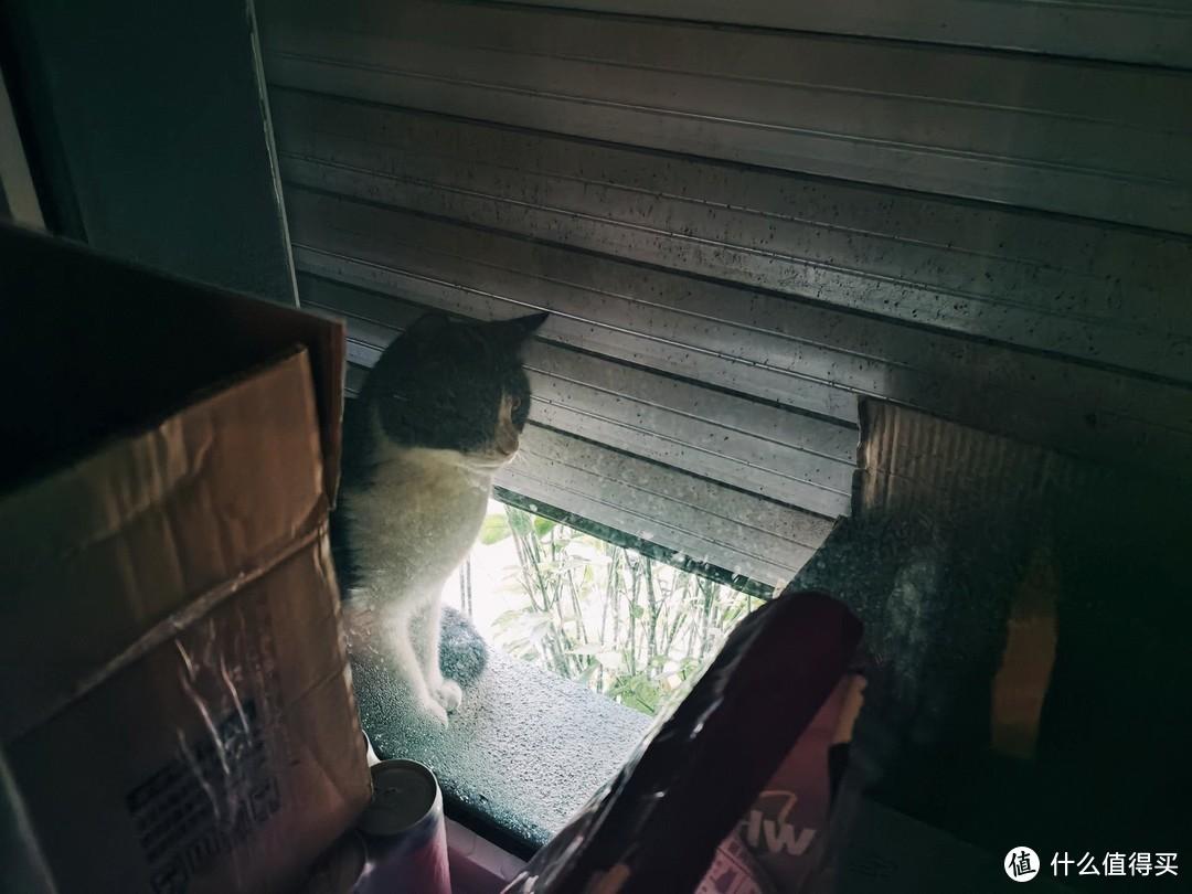 猫粮已经备好可以开饭了,一只徘徊在咖啡馆门口喵星人的故事