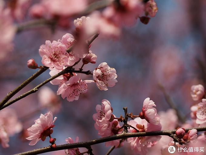 """赏花也要音乐配 三款适合""""花前月下""""的蓝牙音箱"""