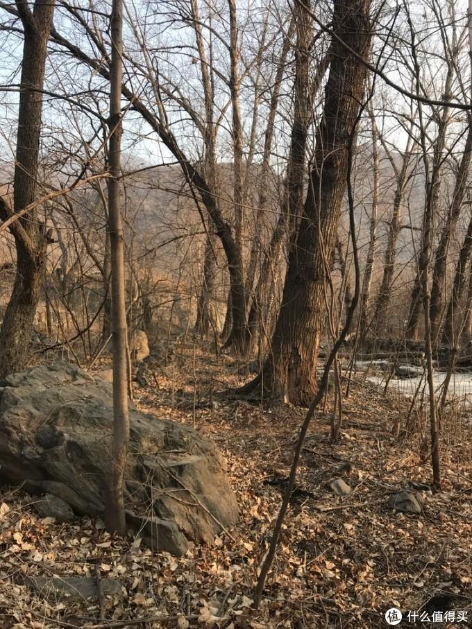 这是山谷河流流经的树林,树下的土,夏天是取不到的,是溪流