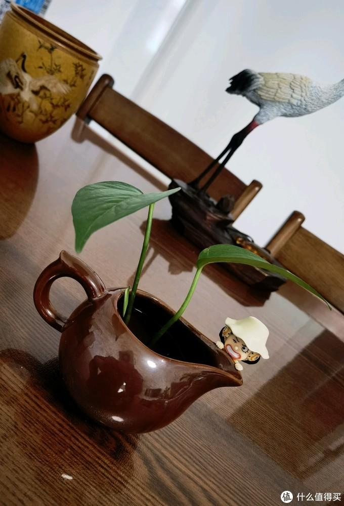 海贼王主题的水培植物